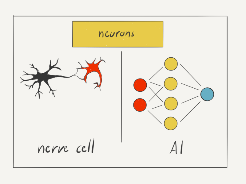 Just like a nerve cell, an artificial neuron processes signals and passes on an output